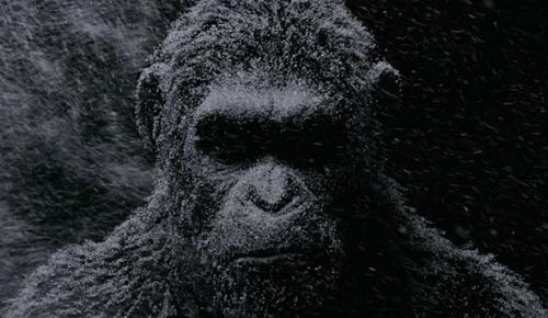 Maymunlar Cehennemi: Savaş filmi fragmanı – Sinemalarda bu hafta