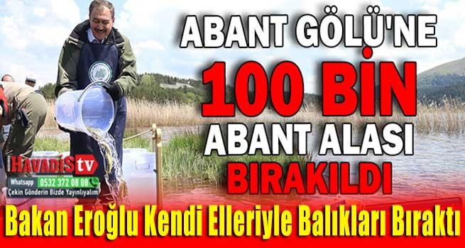 ABANT GÖLÜNE 100 BİN ABANT ALASI BIRAKILDI