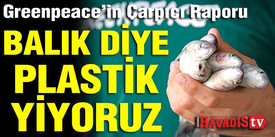 Greenpeace'in çarpıcı raporu: Balık diye plastik yiyoruz