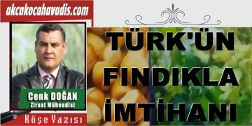 TÜRK'ÜN FINDIKLA İMTİHANI