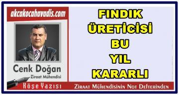 FINDIK ÜRETİCİSİ BU SEZON KARARLI.